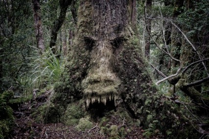 mean tree