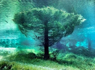 tree water