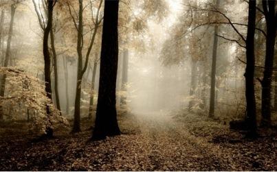 tree path misty